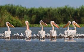 Romanian Danube Delta